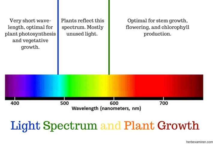 Light Spectrum And Plant Growth Detailed Chart
