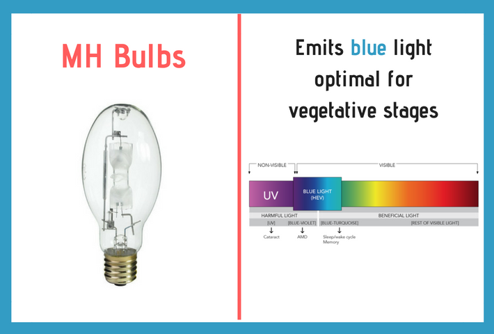 mh bulbs emit blue for vegetative stages